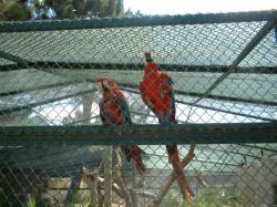 Dia dos Avós - Badoca Safari Park